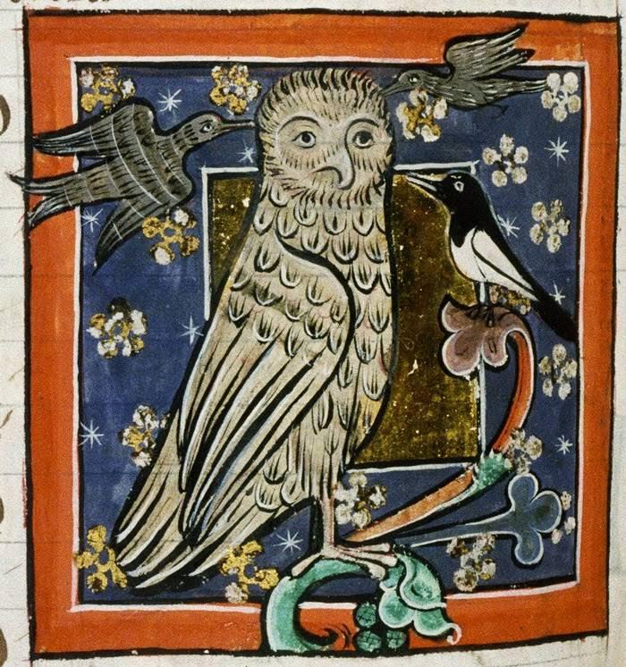 Az ókorban a bölcsesség, a középkorban a halál jelképének, illetve a boszorkányok madarának tartott bagoly egy 13. századi állatkönyv miniatúráján • Kép forrása: iconosmedievales.blogspot.com