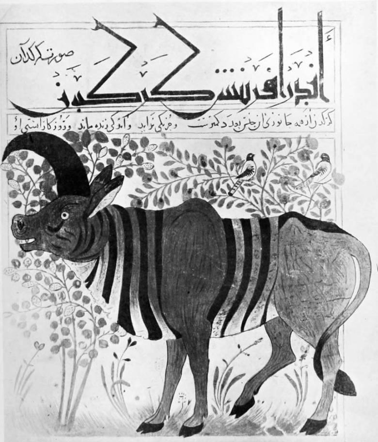 Orrszarvú egy 1. század végén írt perzsa természettankönyvben • Kép forrása: gutenberg.org