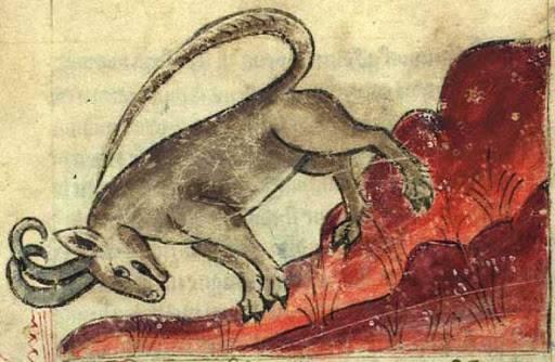 Kőszáli kecske ábrázolása egy reneszánsz kori műben (Anne Walshe bestiáriuma, 15. század)  • Kép forrása: bestiary.ca