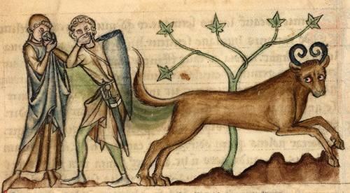 A képzeletbeli bonnacon az 1240-es években írt és illusztrált Bodley kéziratban • Kép forrása: viciodapoesia.com