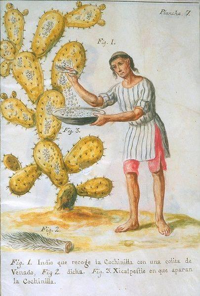 Amerika felfedezése után terjedt el a Mexikóban honos fügekaktusz levelein élősködő tetűből nyert festék, a hidegvörös kármin • Forrás: toniwattsartstudio.com