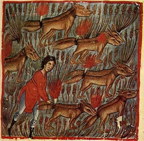 A bibliai Sámson – a római hagyományt követve – háromszáz róka farkára égő csóvát kötve gyújtotta fel a filiszteusok gabonáját, szőlőit és olajfáit (középkori miniatúra) • Kép forrása: 4.bp.blogspot.com