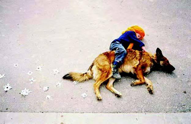 A sivatag átszelése egy kutya hátán